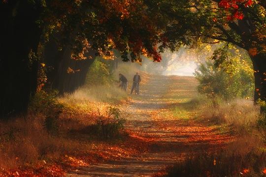 Fall image2