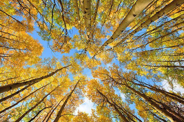 Fall image3