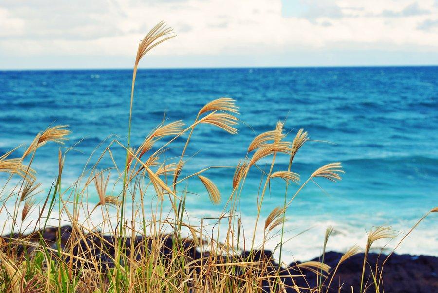 ocean_breeze
